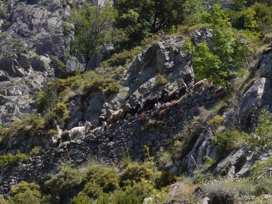 auf dem Transhumanz-Weg zur Bocca di Capronale