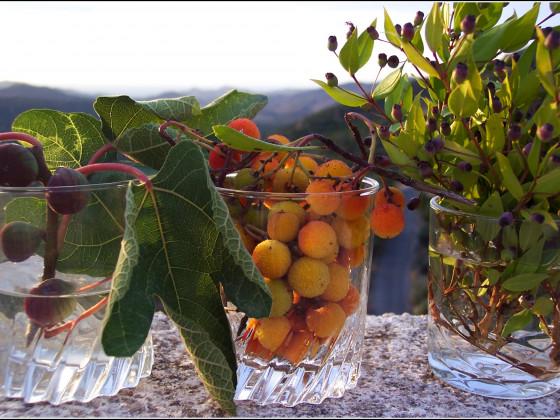 Korsische Früchte