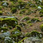 Symbiose Moos und Stein