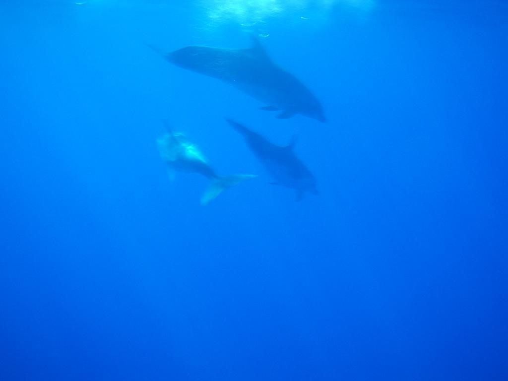 sous l'eau 2