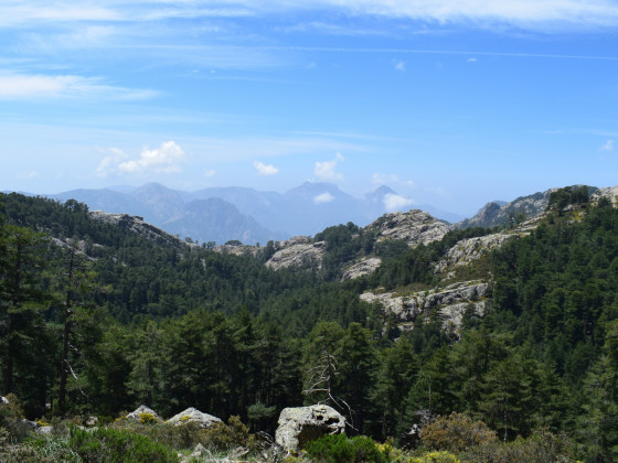 Forêt de Lindinosa
