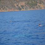 à la poursuite du dauphin