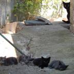 Nachwuchs in Caldarello - Mama Passt schon auf