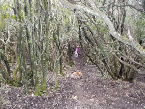 forêt de San Sisto