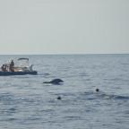 nageurs et dauphin
