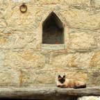 Tierischer Korse in Murzo