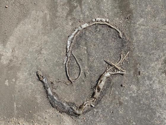 Zorni Snake Plisken