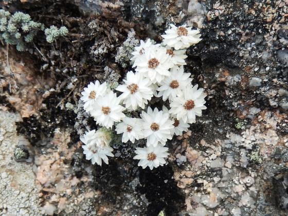 Flora Blanc