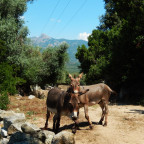 Corse du Sud D22 Rechts der Strasse